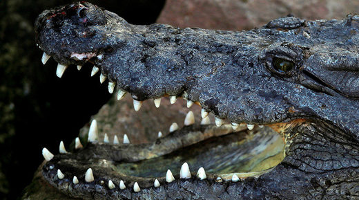 Missing hunter eaten by crocodiles in Zimbabwe