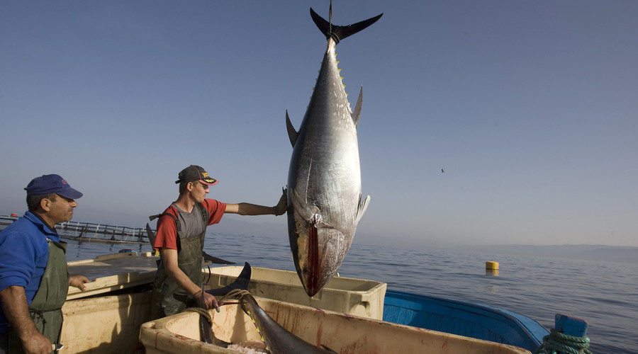 news lets mexico slap trade sanctions tuna