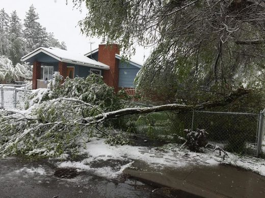 Snowstorm in mid-May snaps trees, cuts power in Missoula, Montana; 5 inches of snow reported