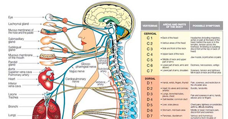 Cleanse Your Lymphatic System With Vigorous Walking