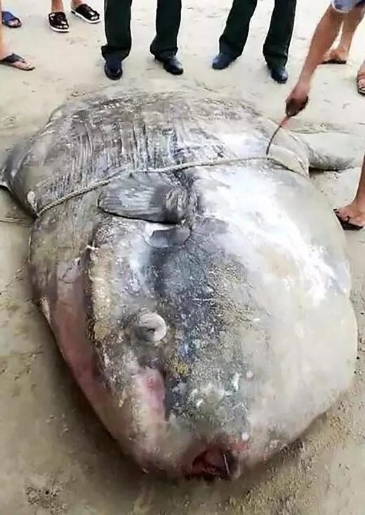 Two bizarre massive fish wash up dead on Chinese beach