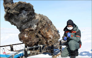 The frozen mammoth found in Lyakhovsky