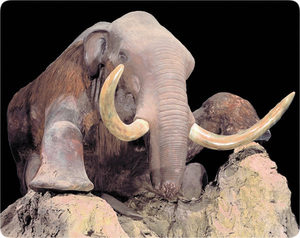 The Berezovka mammoth