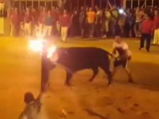 bull kills itself horns fire