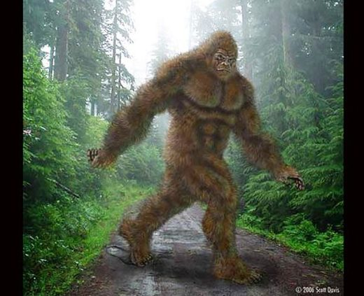 North Carolina group spots a Bigfoot in the forest