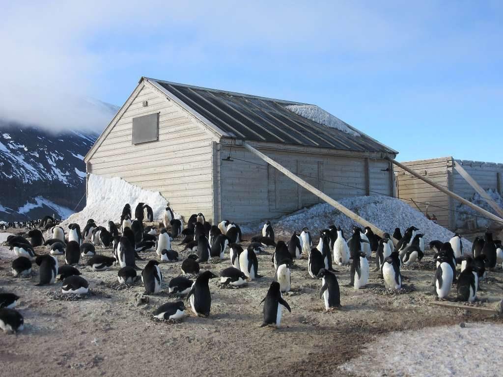Antarctic Heritage Trust Cake