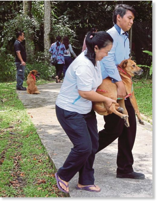 The Sarawak Health Department said of the total, 84 involved domestic pets (dogs and cats), while eight involved feral animals (dogs, cats and rats).
