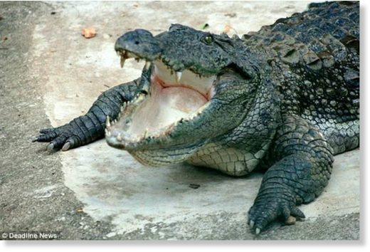 The alleged crocodile attack is the second in Sri Lanka this year