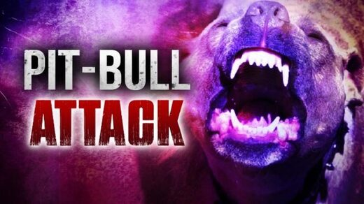 Pit bulls involved in attack that killed woman in Bakersfield, California