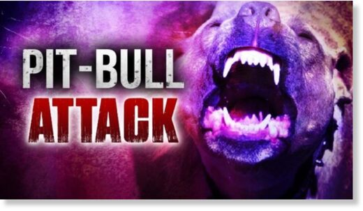PIT BULL ATTACK