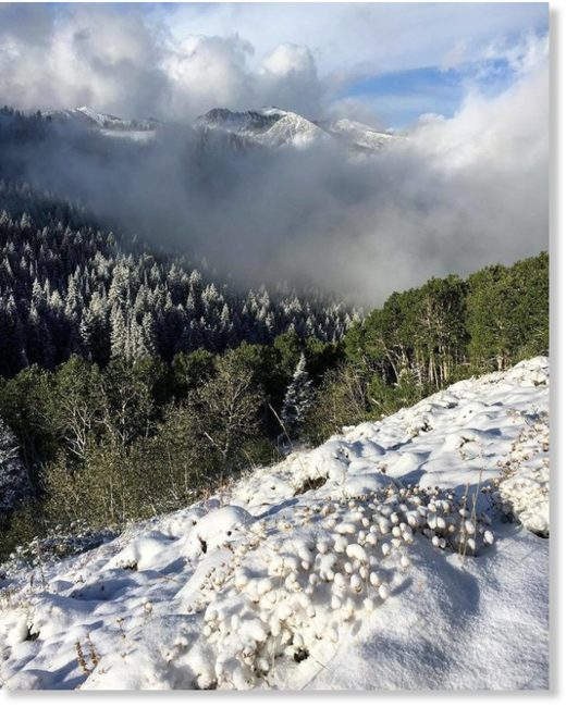 Fresh snow in Big Cottonwood Canyon