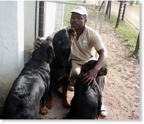 Collin Mthembu in better times with the three dogs who would end up killing his brother Khulekani.