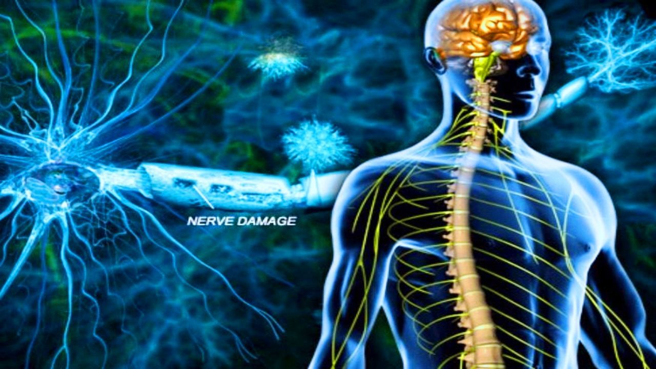 a discussion of the new ways to aid in nerve regeneration Reincarnation an almost new scientific development  i delay discussion of the enormous benefits that will arise,  this is sure to aid the regeneration process.