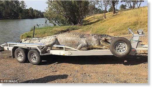 A giant crocodile was unlawfully shot in central Queensland (pictured) in September