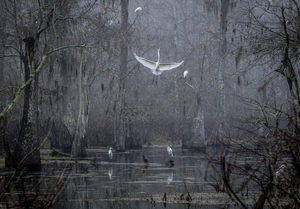 Cypress Island Preserve, Breaux Bridge, LA