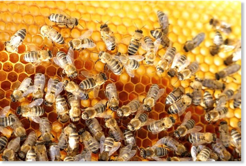Man dies after being attacked by a swarm of bees in ... - photo#19