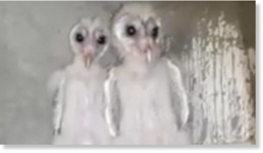 Birds with spooky eyes mistaken for aliens in India