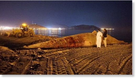 The whale was found motionless and floating in the water by fishermen