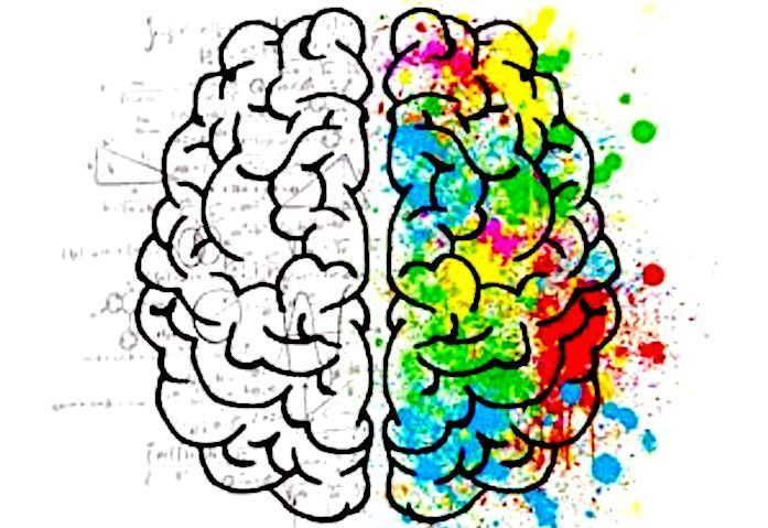 The smarter person\'s brain is just wired better -- Science ...
