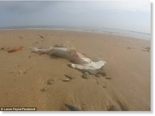 Dozens of dead sharks have washed up on a North Queensland beach, with mystery surrounding how the animals died