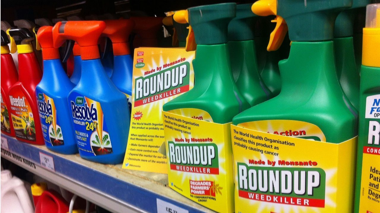 roundup and monsanto Monsanto's flagship weed killer, roundup, has had a tough year and it could get worse with roundup at the center of a federal case in the united states over claims that it causes cancer, european union officials will meet in brussels on thursday as they weigh whether to allow the continued use.