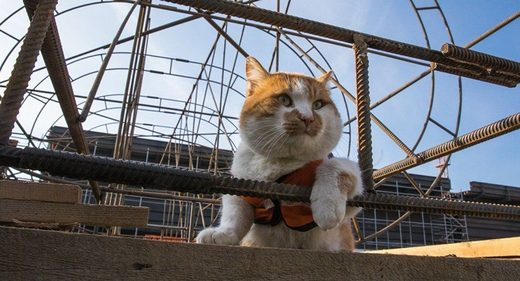 The chief construction supervisor of bridge connecting Russia to Crimea is a cat