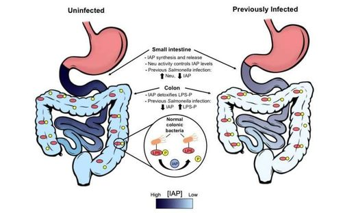 recurrent bacterial infections trigger chronic disease