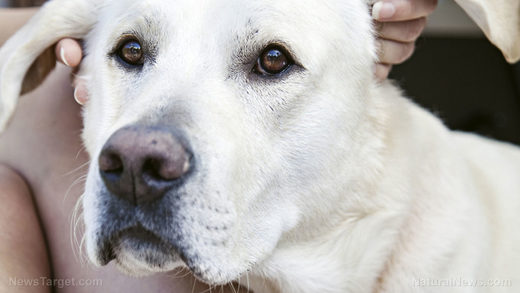 Animal abuse: California shelter proposing to put all dogs on vegan diet