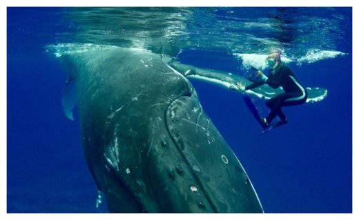 Nan Hauser with Whale