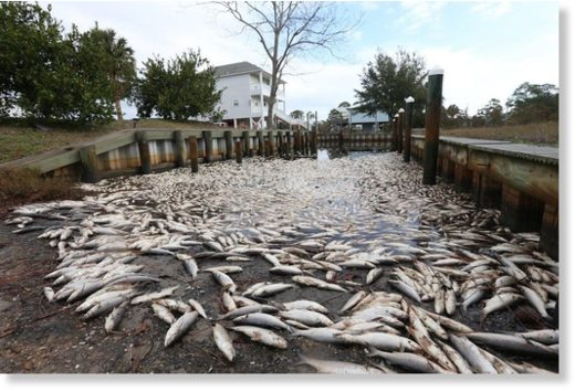 Residents near Little Lagoon in Gulf Shores are dealing with the effects of a large fish kill