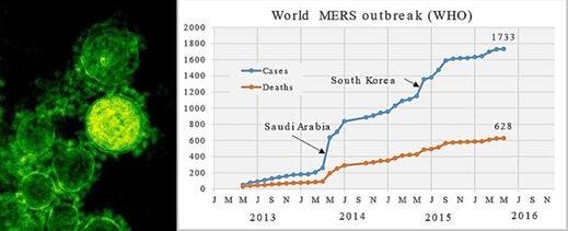 MERS deaths