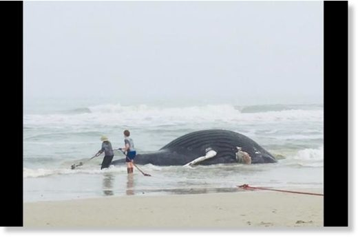 Dead whale washes up on beach