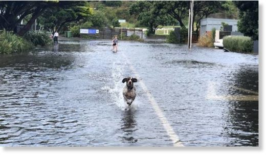 Flooding in Burnham St, Seatoun in Wellington was fun for some on Thursday afternoon.