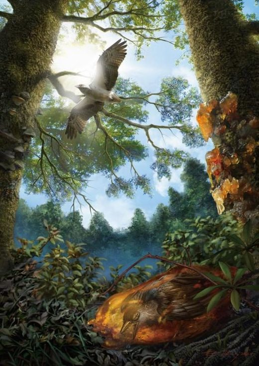 An illustration shows the young Cretaceous bird trapped in tree resin, which would eventually fossilize into amber.