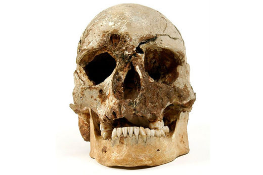 The skull of Cheddar Man, the oldest complete skeleton of a human found in Britain