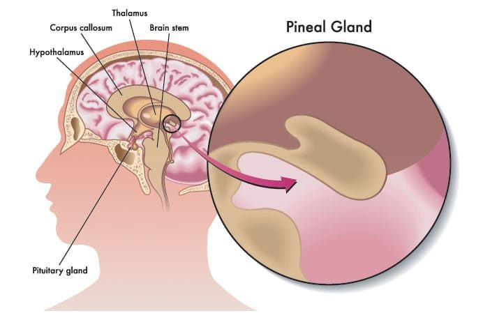 The pineal gland doesn't produce enough DMT for psychedelic