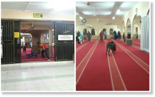 The animal was earlier spotted chasing some children outside the mosque before it ran inside and charged at the man.
