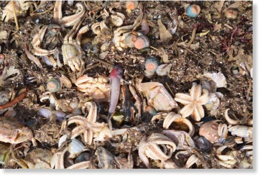 Tens of thousands of creatures have washed up dead.