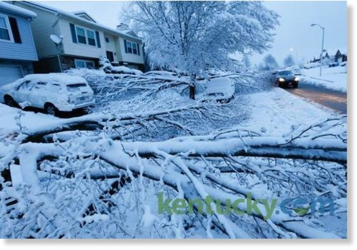 Trees weighted down by heavy snow fell on vehicles on Hartland Pkw.