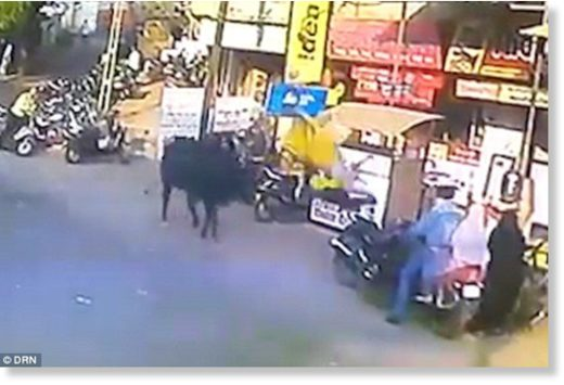 The huge black bull stalks the woman before charging at her and hurling her into the air
