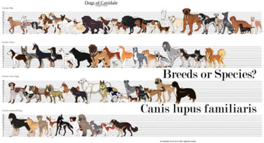 dogs breeds or species