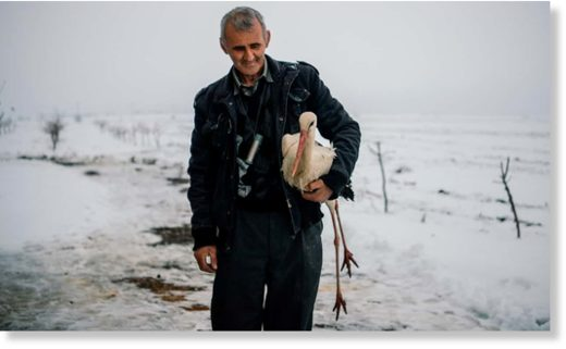 Safet Halil holds a stork in his farm backyard. He found five of the stranded birds, took them home and lit a stove to warm them up, before feeding them fish.