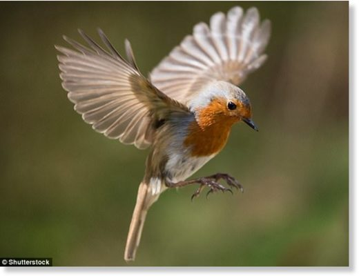 Migrating birds appear to have a 'sixth sense' which means they always manage to find their nesting grounds