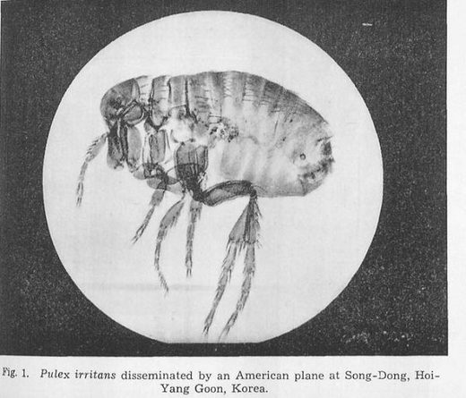 March 1952: U.S. dropped plague-infected fleas on North Korea