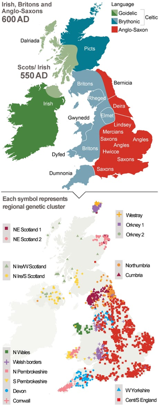 genetic map uk anglo saxon tribes