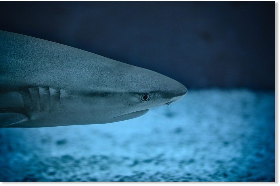 Shark attack confirmed at Hua Hin beach in Thailand -- Earth