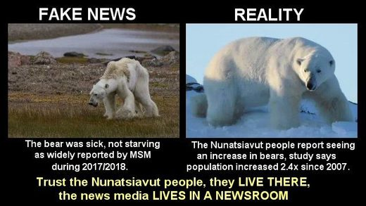 fake news polar bear starvation