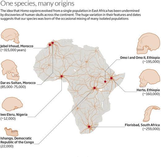 human origins africa species