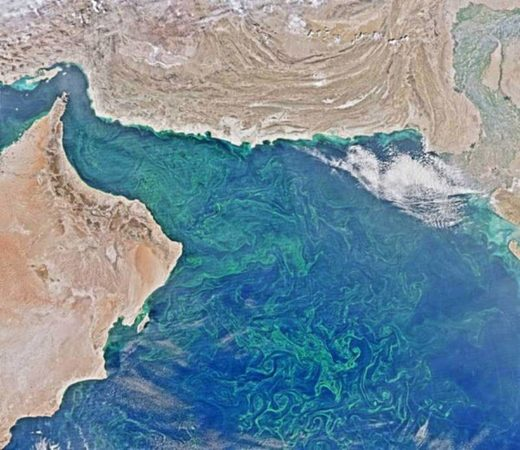 plankton survey dead zone gulf of Oman