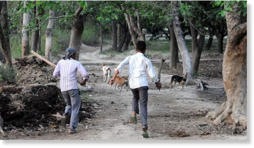 Villagers chasing away dogs in Sharfapur village in Sitapur on May 1.